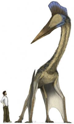 20081209191829-pterosaurio.jpg