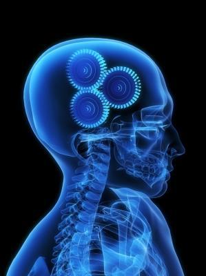 20081211202005-cervell.jpg