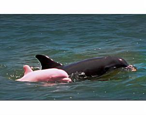 20090304161427-delfin-rosa.jpg