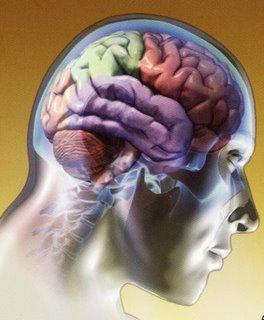 20090313212300-cerebro.jpg