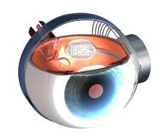 20090404121454-ojo-bionico.jpg