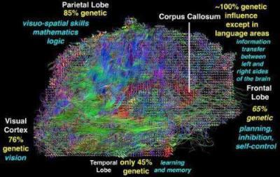 20090428231302-estructura-cerebro-funciones2.jpg
