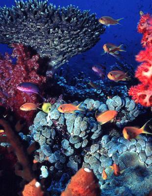 20091115210026-corals-2.jpg