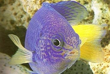 20100225214952-peix.jpg