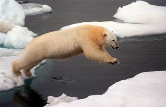 20100301225844-oso-polar.jpg