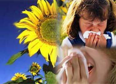 20100304164922-alergiasntnva.jpg