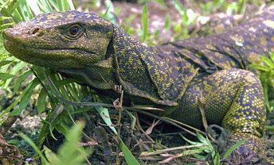 20100407184049-lagartoo.jpg