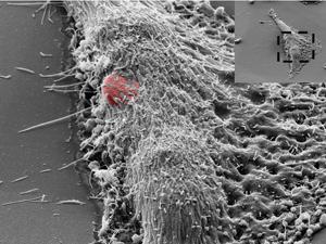 20100510182853-sensor-celulas-csic-interiorartculo.jpg