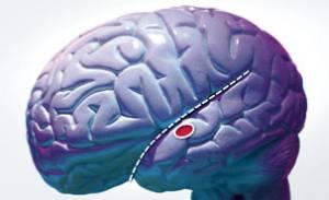 20100606190929-cervell.jpg
