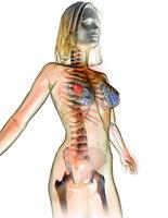 20101003125548-descubren-como-la-terapia-de-sustitucion-hormonal-y-la-pildora-causan-cancer-de-mama-medium-1-.jpg