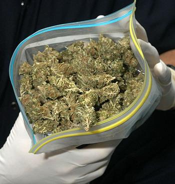 20101130222330-cannabis.jpg