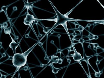 20120209115215-neuronas-800x600.jpg