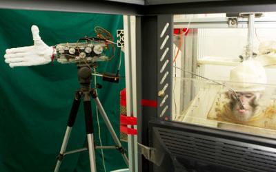 20120303210615-mono-mano-robotica.jpg