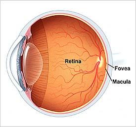 20120516183920-20081210-mgb-retina-.jpg