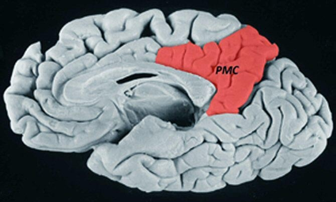 20121015203134-cervell.jpg