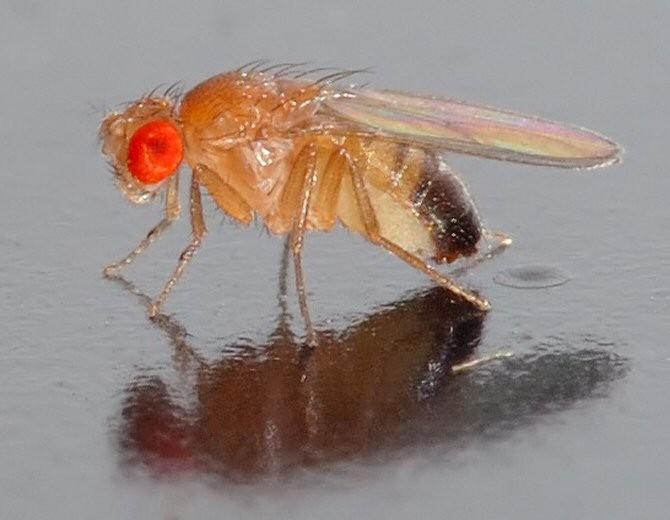 20121122230148-mosca.jpg
