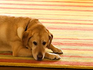 20121124231545-perro.jpg