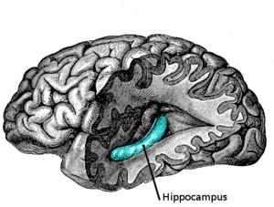 20130528223941-hipocamp.png