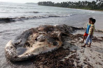 20140603160438-por-que-explotan-las-ballenas.jpg